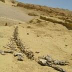 Wadi Hitan: Whales Valley – Egypt