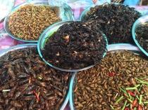 insetos3