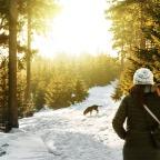 Vai viajar com pet? Confira as condições para levar seu animal