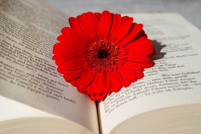 book-3259352_1920