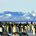 A incrível viagem de Shackleton: o fracasso é essencial